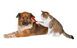 掠过一条有福的狗的猫 库存图片