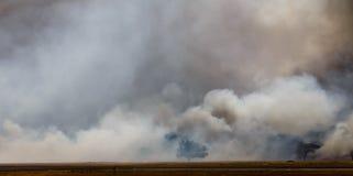 掠过灼烧的野火火焰和烟周围树 免版税库存图片