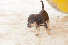 探索世界的狗小狗 免版税库存图片