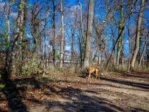 探索在森林里的狗在冬天期间 库存照片