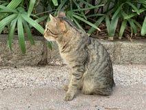 探索在街道生活方式的猫 图库摄影