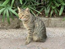 探索在街道生活方式的猫 库存照片