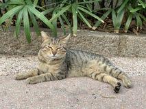 探索在街道生活方式的猫 库存图片