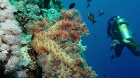 探索洞的洞潜水的水下的轻潜水员潜水 红海埃及 影视素材