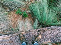 探索国家公园Nevado de托卢卡,墨西哥 免版税库存照片