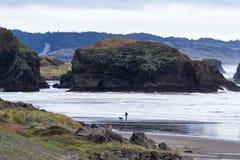 探索海滩的家庭 库存照片