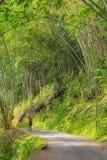 探索的豪华的绿色竹森林 免版税库存图片