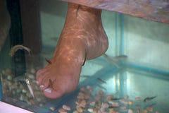 接受与小鱼的妇女按摩 剥皮与鱼 库存照片