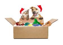 接受圣诞节礼物发货的狗和猫 免版税库存照片