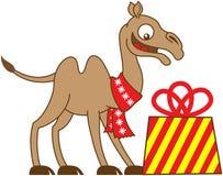 接受圣诞节礼物的凉快的骆驼 库存图片