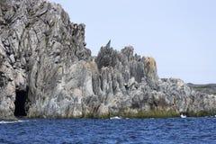 接合的岩石和洞,圣安东尼,纽芬兰 库存图片
