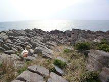 接合的海岸 库存图片