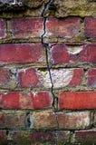 接管的自然,在砖基础的裂缝 库存照片