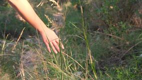 接触在慢动作的妇女的手草 影视素材