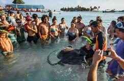 接触在浅水区的人们一条黄貂鱼 库存照片