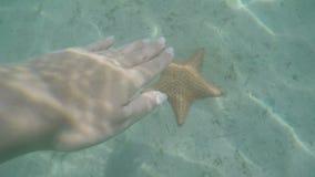 接触海星在水面下在含沙海底,自然光,加勒比海,旅行冒险概念的女性手 影视素材