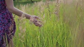 接触草的一只美好的少妇` s手的特写镜头图片 影视素材