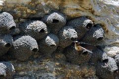 接近它的巢 免版税库存照片