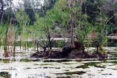 接近宅基的佛罗里达沼泽 库存照片