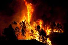 接近房子的森林火灾 免版税库存照片