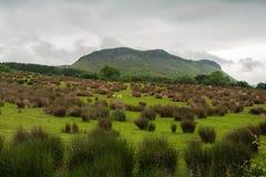 接近斯莱戈,康诺特省的五颜六色的草甸 免版税图库摄影