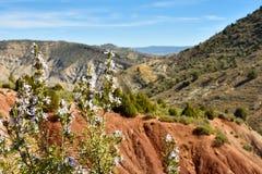 接近有紫色花的一些迷迭香枝杈在与绿色领域、ref沙子和天空蔚蓝风景的山在 库存照片