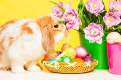 接近桃红色花的兔宝宝在白色桌上 库存图片