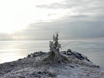 接近湖的一棵冻树 免版税库存照片