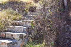 接近用步做的台阶混凝土和石头在有生长在步附近的许多不同的植物的一个庭院里 免版税图库摄影