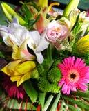 接近的五颜六色的花 免版税图库摄影