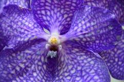 接近的兰花紫色 图库摄影