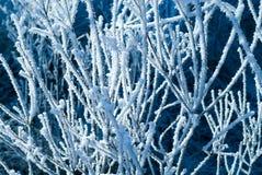 接近的冻结的结构树  免版税库存照片