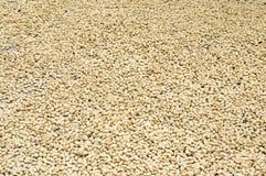 接近的咖啡干燥谷物 库存照片