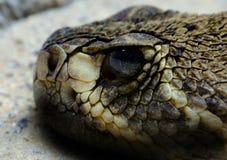 接近的响尾蛇 免版税库存照片