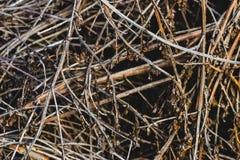 接近的堆干燥木枝杈 图库摄影