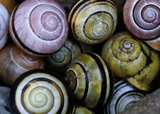 接近的壳蜗牛 库存图片