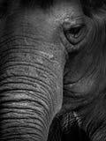 接近的大象 免版税图库摄影
