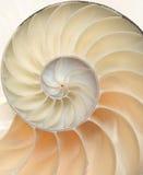 接近的宏观舡鱼壳 免版税库存图片