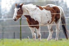 接近的提供的马草甸 免版税图库摄影