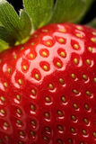 接近的新鲜的草莓 免版税库存图片