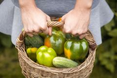 接近的新鲜的蔬菜 库存照片