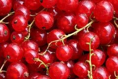 接近的无核小葡萄干红色 免版税库存图片