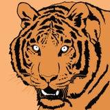 接近的日纵向晴朗的老虎 皇族释放例证