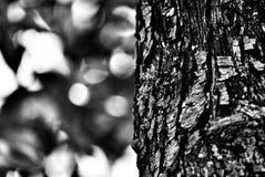 接近的树干 库存照片