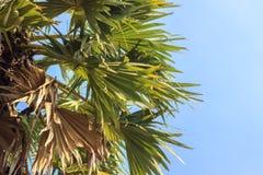 接近的棕榈树 免版税库存照片
