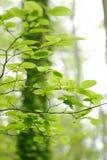 接近的森林生叶  免版税库存照片