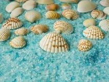 接近的沙子贝壳 免版税库存照片