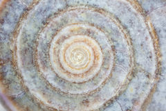 接近的海洋蜗牛 库存图片