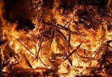 接近的火森林视图 库存照片