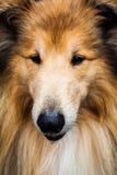 接近的狗 免版税图库摄影